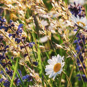Kräuterzusatz Blumenwiese