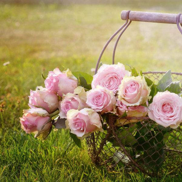 Rosen im Korb, auf grüner Wiese
